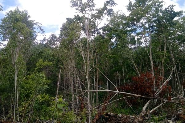 Foto de terreno habitacional en venta en macario gomez manzana 18 lote 52 , tulum centro, tulum, quintana roo, 7506303 No. 17