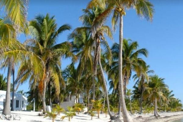Foto de terreno habitacional en venta en  , mahahual, othón p. blanco, quintana roo, 6169430 No. 04