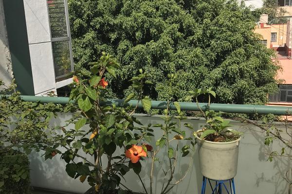 Foto de departamento en venta en maimonides , polanco iv sección, miguel hidalgo, distrito federal, 3084538 No. 11