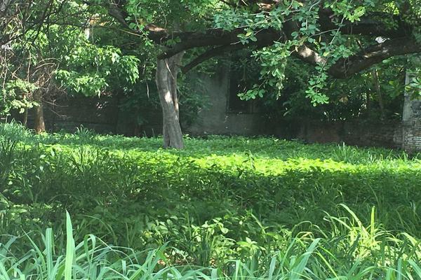 Foto de terreno habitacional en venta en mariano abasolo 77, colima centro, colima, colima, 0 No. 09