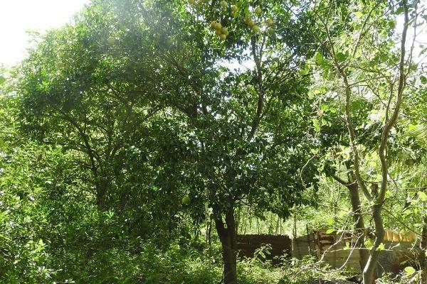 Foto de rancho en venta en  , m?rida, m?rida, yucat?n, 5665696 No. 26