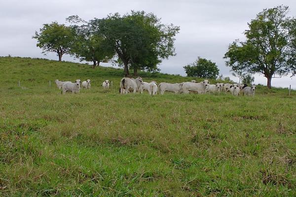Foto de rancho en venta en  , metlaltoyuca, francisco z. mena, puebla, 15751133 No. 15