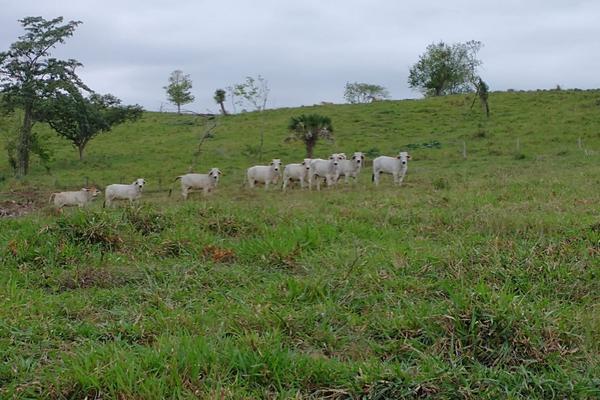 Foto de rancho en venta en  , metlaltoyuca, francisco z. mena, puebla, 15751133 No. 17
