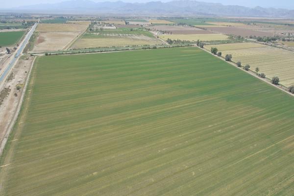 Foto de terreno habitacional en venta en  , mexicali, mexicali, baja california, 12812892 No. 02