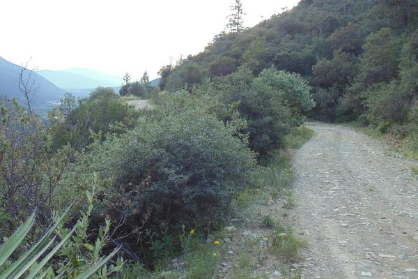 Foto de terreno habitacional en venta en monterreal , la efigenia, arteaga, coahuila de zaragoza, 8671697 No. 04