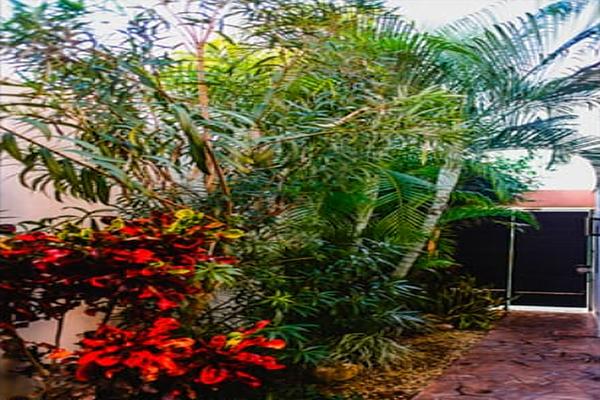 Foto de departamento en renta en  , montes de ame, mérida, yucatán, 5816306 No. 07