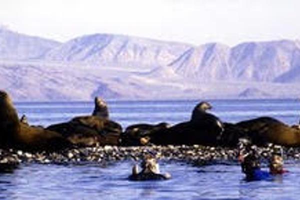 Foto de terreno comercial en venta en n/a , bahía de los ángeles, ensenada, baja california, 3097211 No. 07