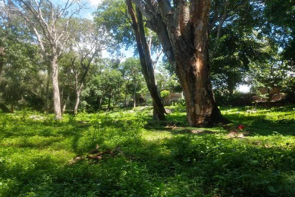 Foto de terreno habitacional en venta en nicasio mendoza , comala, comala, colima, 0 No. 07