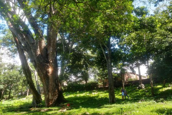 Foto de terreno habitacional en venta en nicasio mendoza , comala, comala, colima, 0 No. 08