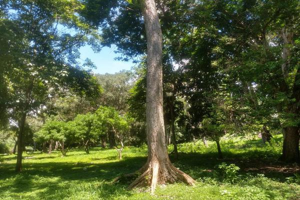 Foto de terreno habitacional en venta en nicasio mendoza , comala, comala, colima, 0 No. 09