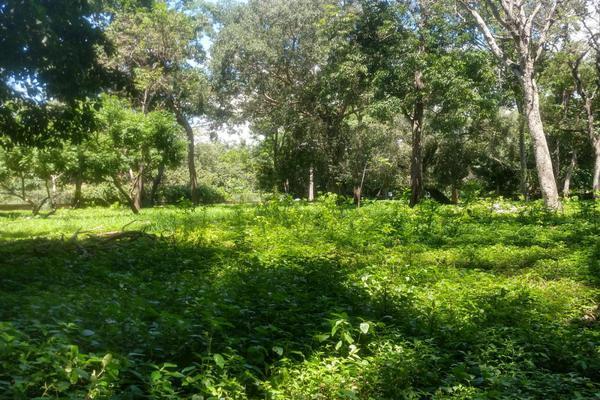 Foto de terreno habitacional en venta en nicasio mendoza , comala, comala, colima, 0 No. 12