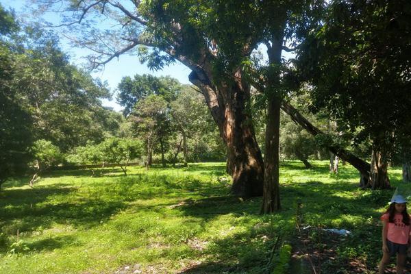 Foto de terreno habitacional en venta en nicasio mendoza , comala, comala, colima, 0 No. 28