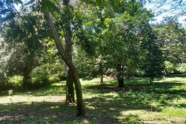 Foto de terreno habitacional en venta en nicasio mendoza , comala, comala, colima, 0 No. 29