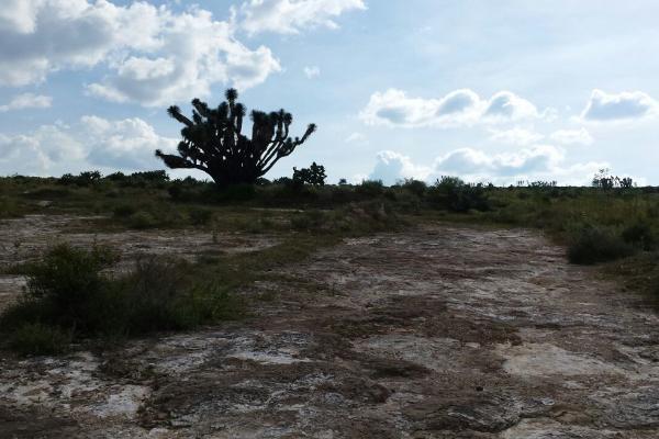 Foto de terreno habitacional en venta en  , san juan tilcuautla, san agustín tlaxiaca, hidalgo, 7304437 No. 37