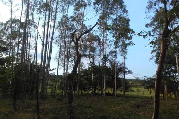 Foto de rancho en venta en olmeca , olmeca, las choapas, veracruz de ignacio de la llave, 8308378 No. 01