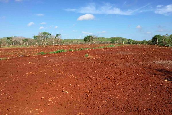Foto de rancho en venta en  , oxkutzcab, oxkutzcab, yucatán, 2628405 No. 06