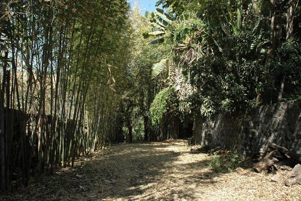 Foto de terreno habitacional en venta en avenida palmira , palmira tinguindin, cuernavaca, morelos, 5323466 No. 02