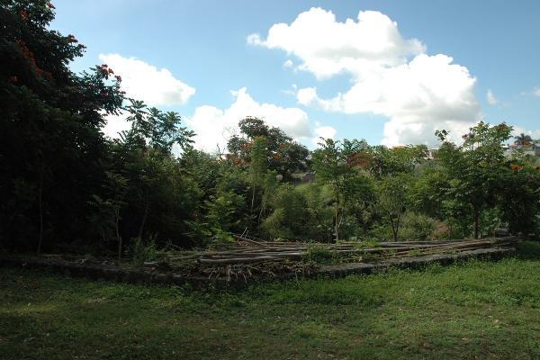 Foto de terreno habitacional en venta en avenida palmira , palmira tinguindin, cuernavaca, morelos, 5323466 No. 06