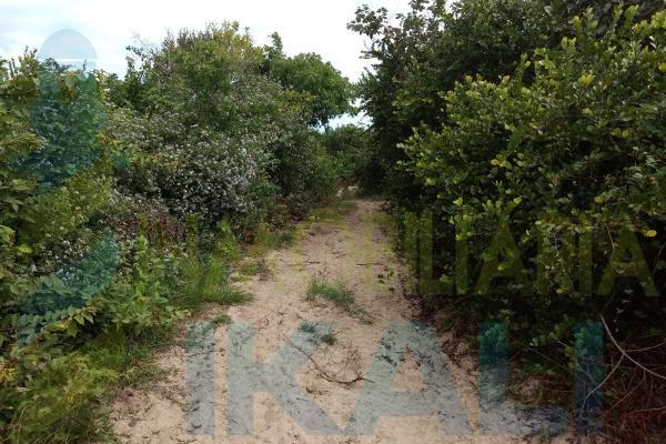 Foto de terreno habitacional en venta en  , palo blanco, tamiahua, veracruz de ignacio de la llave, 10076463 No. 02