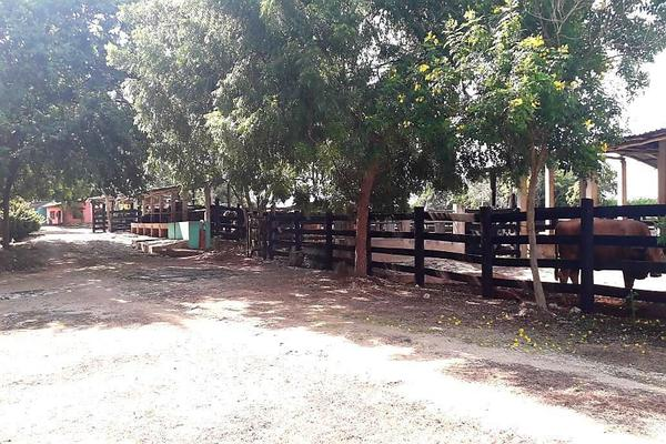 Foto de rancho en venta en  , panaba, panabá, yucatán, 5663461 No. 02