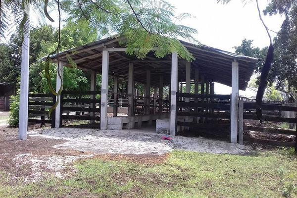 Foto de rancho en venta en  , panaba, panabá, yucatán, 5663461 No. 11