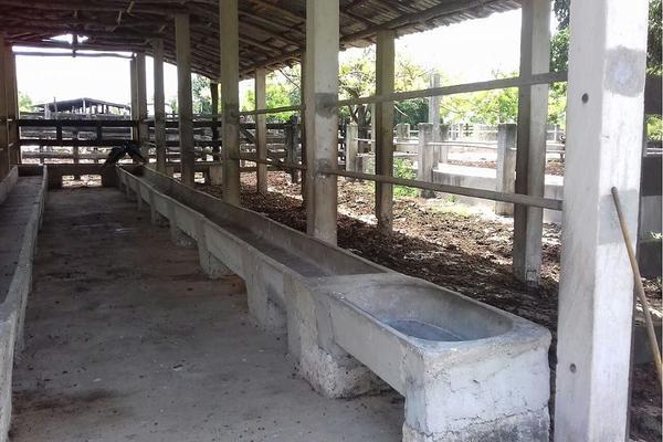 Foto de rancho en venta en  , panaba, panabá, yucatán, 5663461 No. 13
