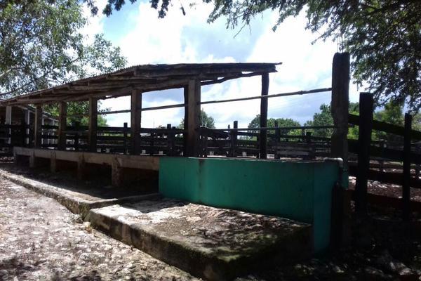 Foto de rancho en venta en  , panaba, panabá, yucatán, 5663461 No. 16