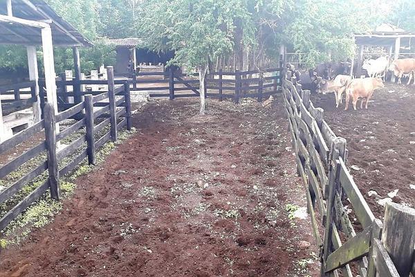 Foto de rancho en venta en  , panaba, panabá, yucatán, 5663461 No. 26