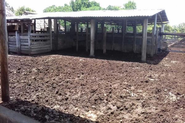 Foto de rancho en venta en  , panaba, panabá, yucatán, 5663461 No. 27