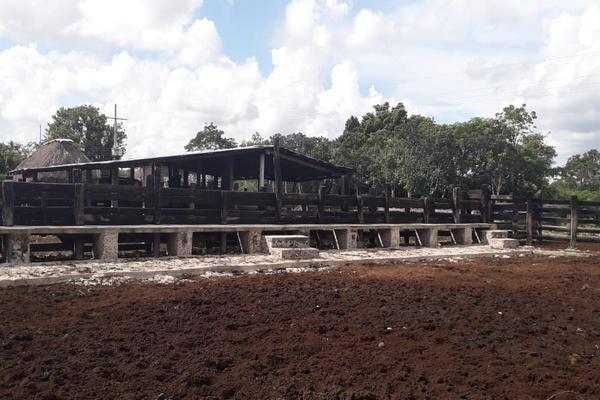 Foto de rancho en venta en  , panaba, panabá, yucatán, 5663461 No. 28