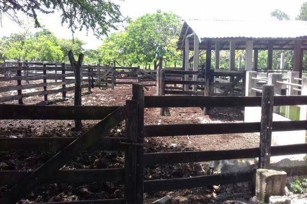 Foto de rancho en venta en  , panaba, panabá, yucatán, 5663461 No. 29