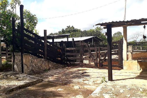 Foto de rancho en venta en  , panaba, panabá, yucatán, 5663461 No. 32