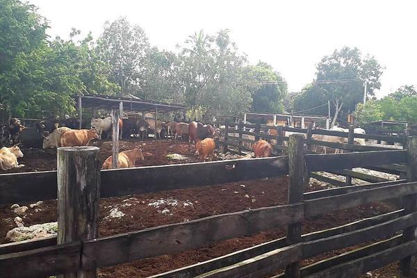 Foto de rancho en venta en  , panaba, panabá, yucatán, 5663461 No. 33