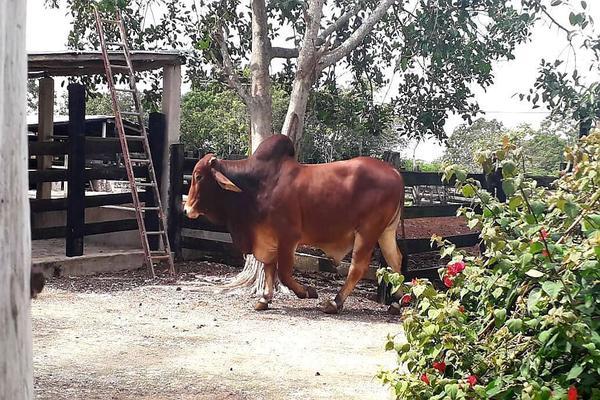 Foto de rancho en venta en  , panaba, panabá, yucatán, 5663461 No. 34
