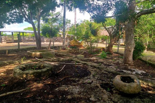 Foto de rancho en venta en  , panaba, panabá, yucatán, 5663461 No. 35