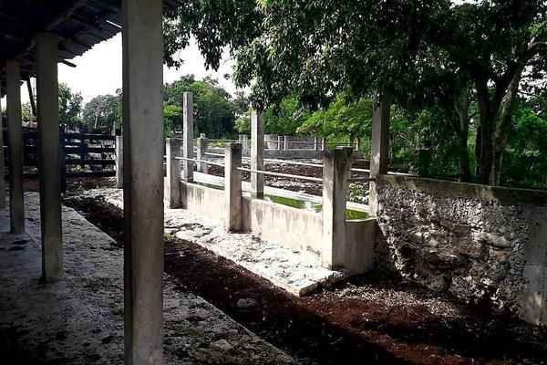 Foto de rancho en venta en  , panaba, panabá, yucatán, 5663461 No. 36