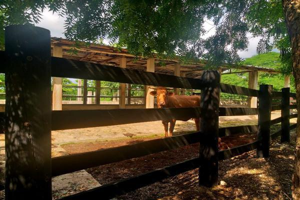 Foto de rancho en venta en  , panaba, panabá, yucatán, 5663461 No. 37