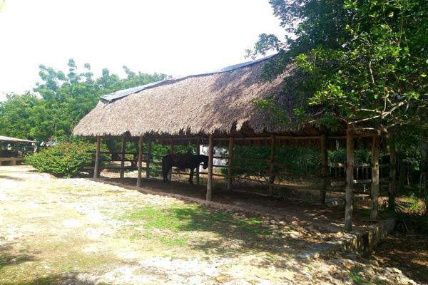 Foto de rancho en venta en  , panaba, panabá, yucatán, 5663461 No. 39