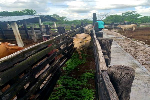 Foto de rancho en venta en  , panaba, panabá, yucatán, 5663461 No. 42