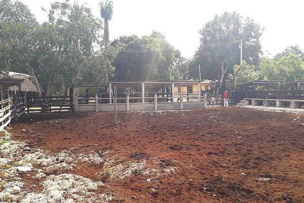 Foto de rancho en venta en  , panaba, panabá, yucatán, 5663461 No. 44