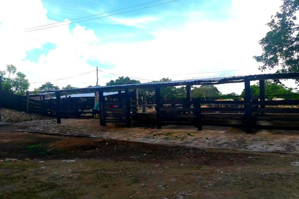 Foto de rancho en venta en  , panaba, panabá, yucatán, 5663461 No. 45