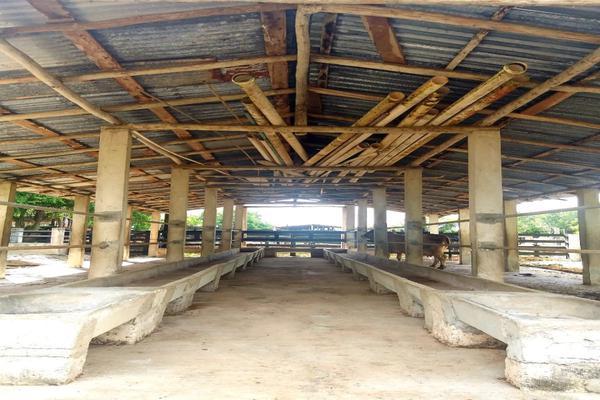 Foto de rancho en venta en  , panaba, panabá, yucatán, 5663461 No. 46
