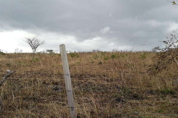 Foto de terreno habitacional en venta en parcela numero 2478 , berriozabal centro, berriozábal, chiapas, 3095944 No. 03