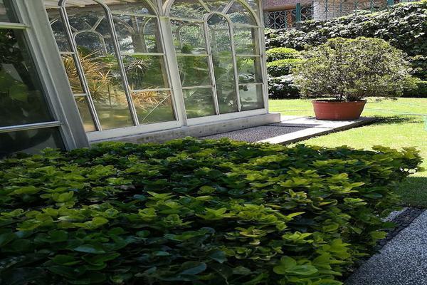 Foto de casa en venta en parque del pedregal , parque del pedregal, tlalpan, df / cdmx, 5705054 No. 10