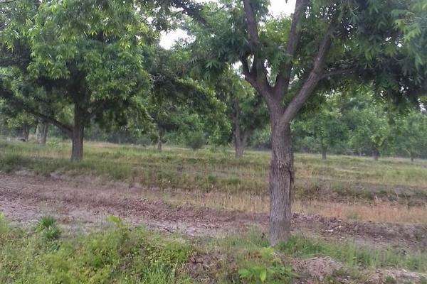 Foto de terreno habitacional en venta en  , parras de la fuente centro, parras, coahuila de zaragoza, 5676724 No. 01