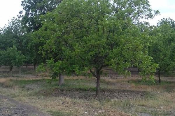 Foto de terreno habitacional en venta en  , parras de la fuente centro, parras, coahuila de zaragoza, 5676724 No. 04