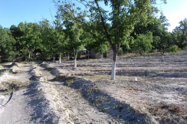 Foto de terreno habitacional en venta en  , parras, parras, coahuila de zaragoza, 8070358 No. 01