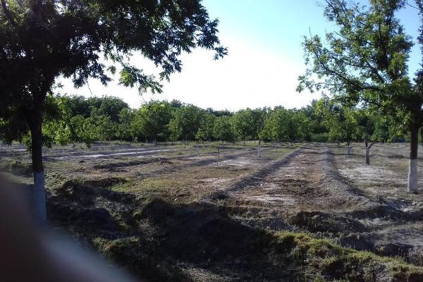 Foto de terreno habitacional en venta en  , parras, parras, coahuila de zaragoza, 8070358 No. 08