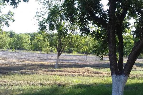 Foto de terreno habitacional en venta en  , parras, parras, coahuila de zaragoza, 8070358 No. 18