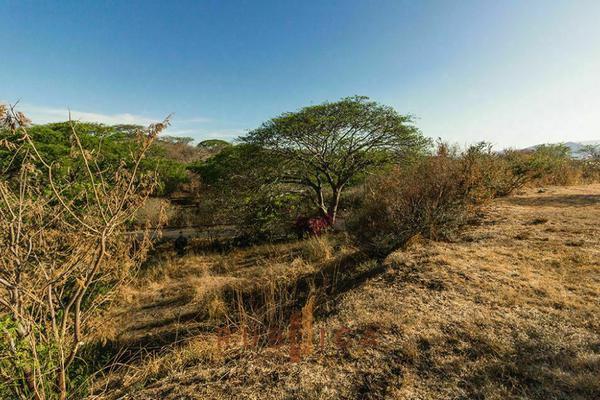 Foto de terreno habitacional en venta en paseo de las orquídeas , comala, comala, colima, 20342420 No. 04